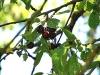chaosreporter-botanischer-augsburg-(14)