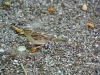 chaosreporter-botanischer-augsburg-(15)