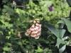 chaosreporter-botanischer-augsburg-(18)