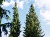 chaosreporter-botanischer-augsburg-(23)
