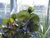 chaosreporter-botanischer-augsburg-(9)