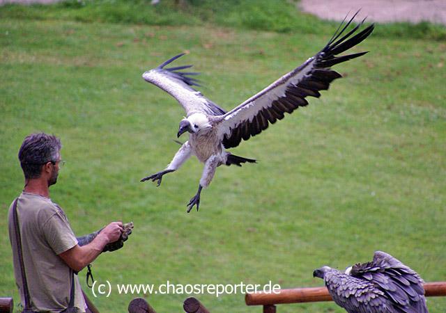 Greifvogelschau im Wildparadies Tripsdrill