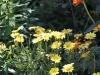 chaosreporter-botanischer-augsburg-(5)