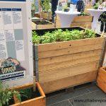 Anpflanzung in einfachen Holzkisten
