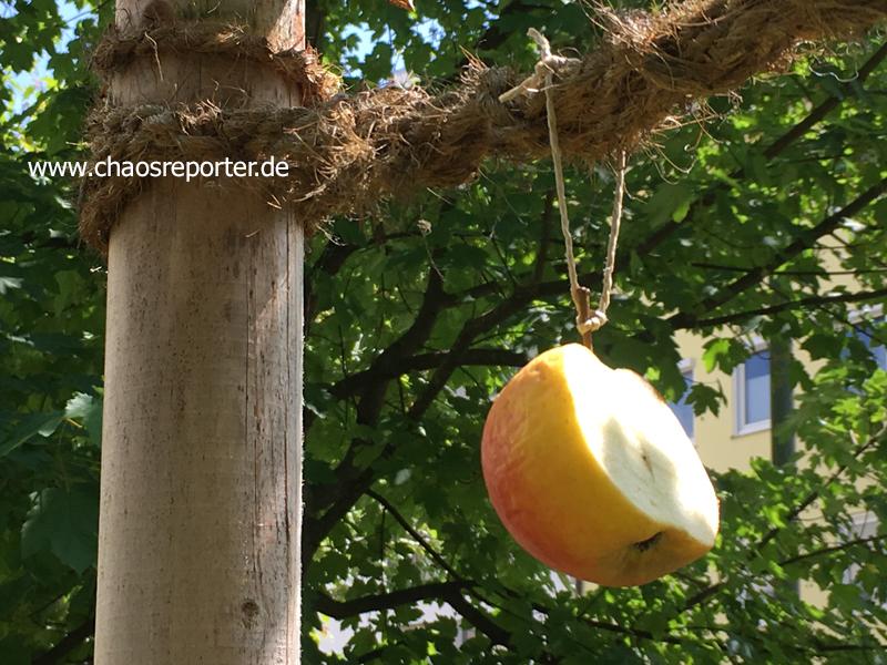 Insektenfutter ein aufgeschnittener Apfel am Baum