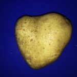 Kartoffel in Herzform (c) www.chaosreporter.de